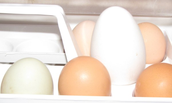 Here you can see our first goose egg, surrounded by 3 of our chicken eggs & 2 store bought farm eggs (browns in front).