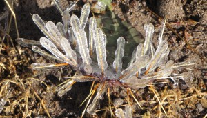 The ice makes cactus look friendly.