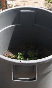 Our potato bucket.