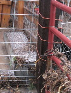 The goat water trough filled with flood debris.