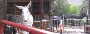 Even the donkeys were a bit miffed at the weather.