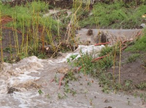 Our irrigation ditch overflowed, but didn't blow out.