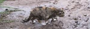 Even the cats got a little wet.