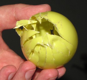What a raccoon can do to a plastic egg.