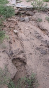 Heavy rains washed out this bit of our driveway, again.