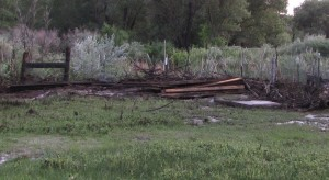 We had lumber near the goose mansion. Now it is pressed up against a fence line.
